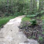 After-Wetland1